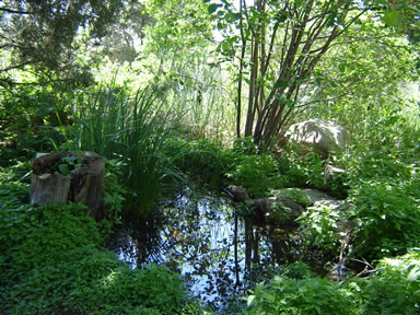pond along path