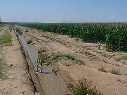 irrigation ditch